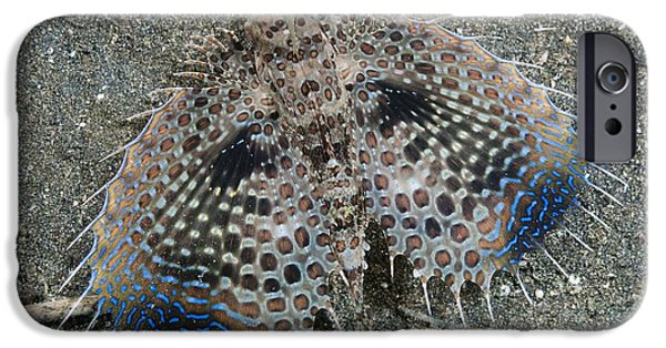 Bed Spread iPhone Cases - Flying Gurnard Displaying iPhone Case by Matthew Oldfield