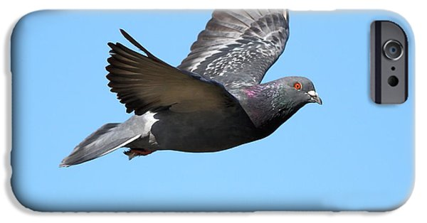 Pigeon iPhone Cases - Flying Pigeon . 7D8640 iPhone Case by Wingsdomain Art and Photography