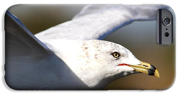 Flying Seagull iPhone Cases - Flying Seagull Closeup iPhone Case by Wingsdomain Art and Photography