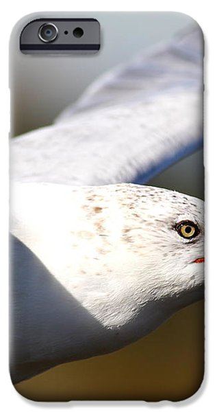 Flying Seagull Closeup iPhone Case by Wingsdomain Art and Photography
