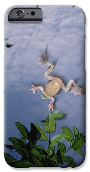 Flying Frog iPhone Cases - Foam Nest Tree Frog Polypedates Dennysi iPhone Case by Mark Moffett