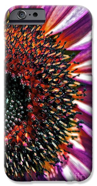 Colorful Sunflower iPhone Cases - For Ana iPhone Case by Gwyn Newcombe