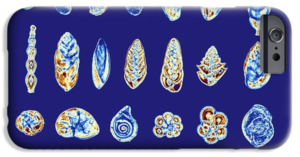 Single Cell iPhone Cases - Foraminiferans, Light Micrograp iPhone Case by Pasieka