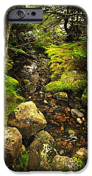 Forest Detail iPhone Cases - Forest creek iPhone Case by Elena Elisseeva