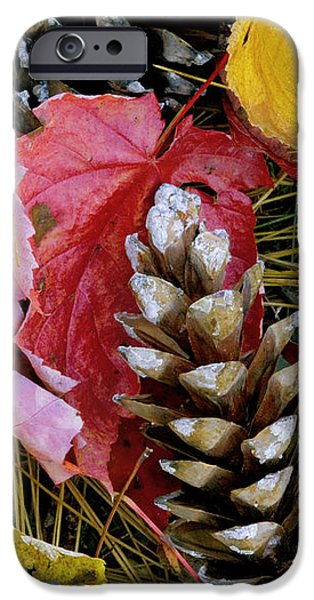 Forest Floor Portrait iPhone Case by Rich Franco