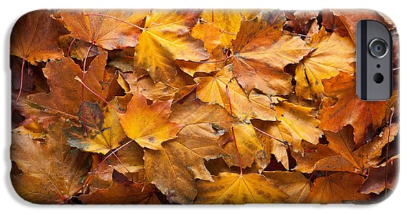Autumn Woods iPhone Cases - Forest Floor iPhone Case by Steve Gadomski