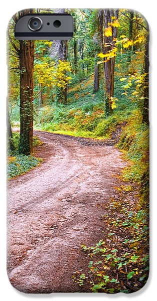 Forest Footpath iPhone Case by Carlos Caetano