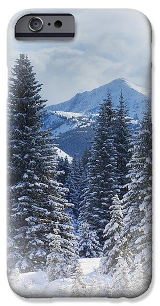 Forest In The Winter iPhone Case by Carson Ganci