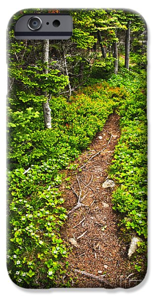 Forest iPhone Cases - Forest path in Newfoundland iPhone Case by Elena Elisseeva