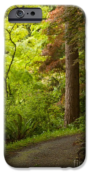 Pathway iPhone Cases - Forest Path iPhone Case by Mike Reid