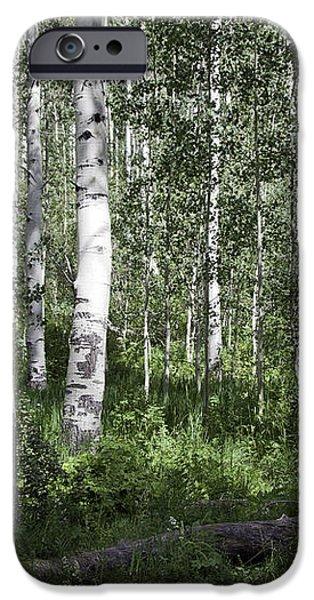 Forever Aspen Trees iPhone Case by Madeline Ellis