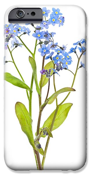 Flora iPhone Cases - Forget-me-not flowers on white iPhone Case by Elena Elisseeva