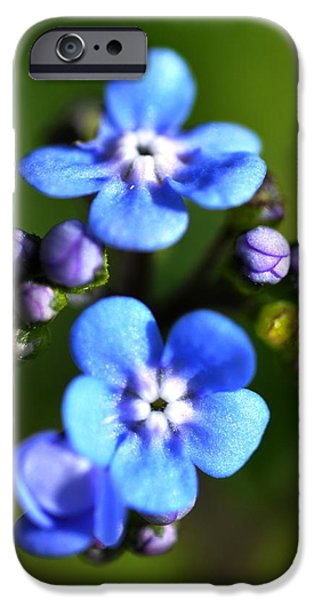 Covering Up iPhone Cases - Forget-me-not iPhone Case by Noah Cole