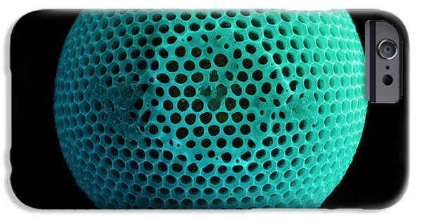 Diatom iPhone Cases - Fossil Diatom, Sem iPhone Case by Ted Kinsman