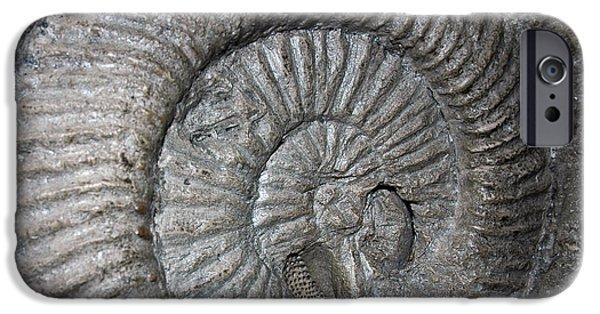 Smithsonian Museum iPhone Cases - Fossil Spiral  iPhone Case by LeeAnn McLaneGoetz McLaneGoetzStudioLLCcom