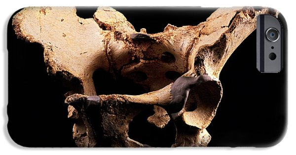 Evolution Of Humanity iPhone Cases - Fossilised Pelvis, Sima De Los Huesos iPhone Case by Javier Truebamsf