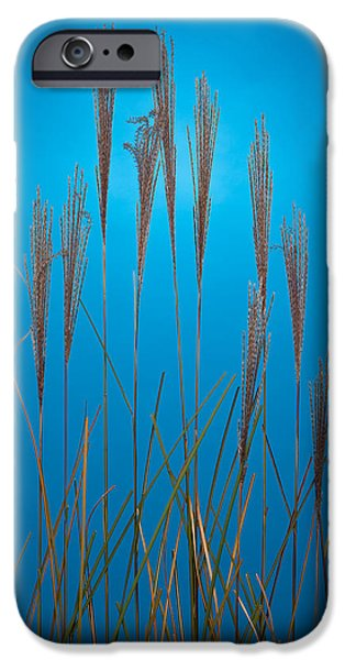 Fountain Grass In Blue iPhone Case by Steve Gadomski