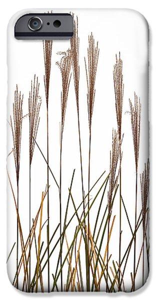 Fountain Grass In White iPhone Case by Steve Gadomski