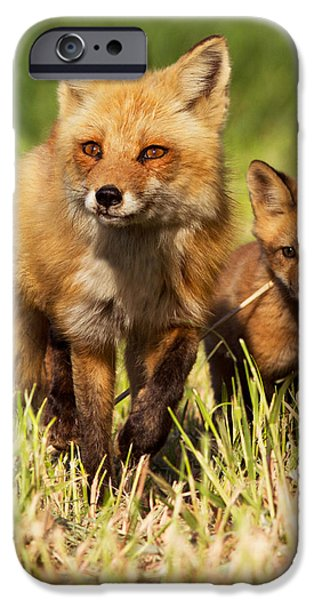 Sly iPhone Cases - Fox Family iPhone Case by Mircea Costina Photography