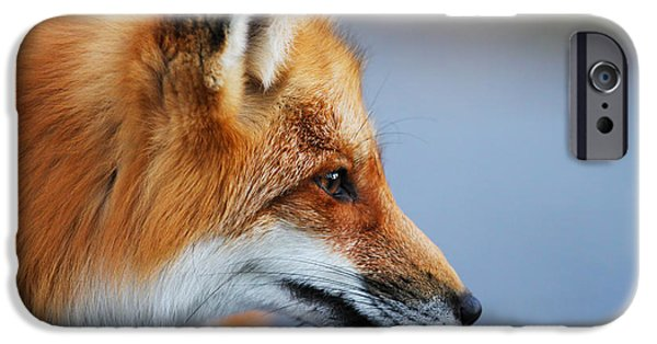 Sly iPhone Cases - Fox profile iPhone Case by Mircea Costina Photography