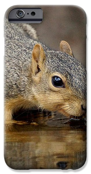 Fox Squirrel iPhone Case by Lori Tordsen