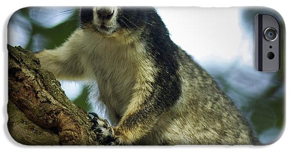 Fox Squirrel iPhone Cases - Fox Squirrel iPhone Case by Phill  Doherty