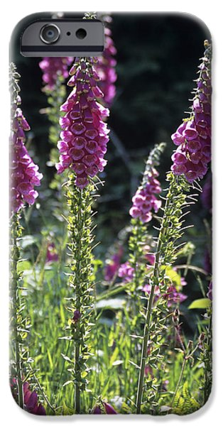Foxglove Flowers Photographs iPhone Cases - Foxglove (digitalis Pupurea) Flowers iPhone Case by David Aubrey