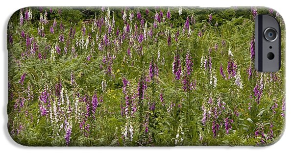 Foxglove Flowers Photographs iPhone Cases - Foxgloves (digitalis Purpurea) iPhone Case by Bob Gibbons