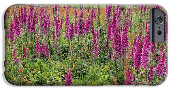 Foxglove Flowers Photographs iPhone Cases - Foxgloves (digitalis Purpurea) iPhone Case by Dr Keith Wheeler