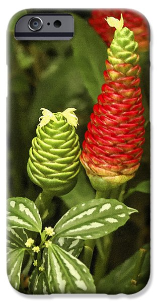 Fragrant Red iPhone Case by Carolyn Marshall