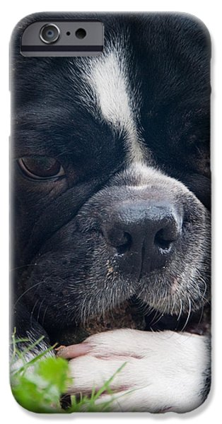 French Bulldog iPhone Cases - French Bulldog iPhone Case by Stylianos Kleanthous