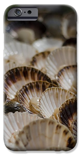 Fresh from the Sea iPhone Case by Heather Applegate