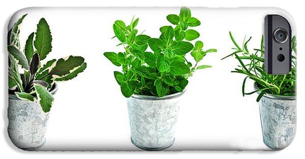 Herbs iPhone Cases - Fresh herbs iPhone Case by Elena Elisseeva