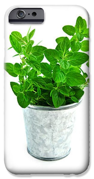 Fresh herbs iPhone Case by Elena Elisseeva