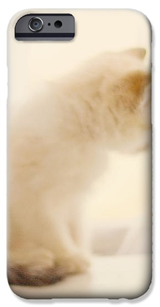 Fresh Wonder iPhone Case by Amy Tyler