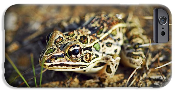 Little iPhone Cases - Frog iPhone Case by Elena Elisseeva