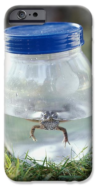 Frog in a Jar iPhone Case by Adam Crowley