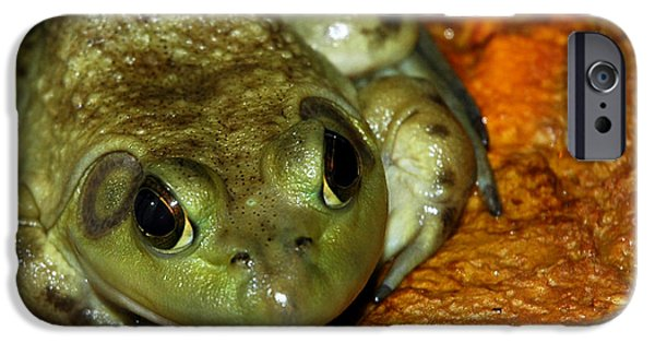 Nature Center Pond iPhone Cases - Frog Love iPhone Case by LeeAnn McLaneGoetz McLaneGoetzStudioLLCcom