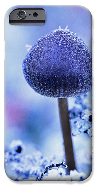 Purple Mushroom iPhone Cases - Frost Covered Mushroom, North Canol iPhone Case by Robert Postma