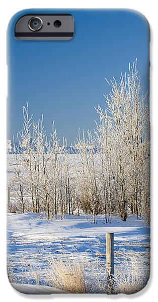 Frost-covered Trees In Snowy Field iPhone Case by Michael Interisano