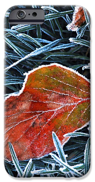 Winter Mornings iPhone Cases - Frosty leaf iPhone Case by Elena Elisseeva