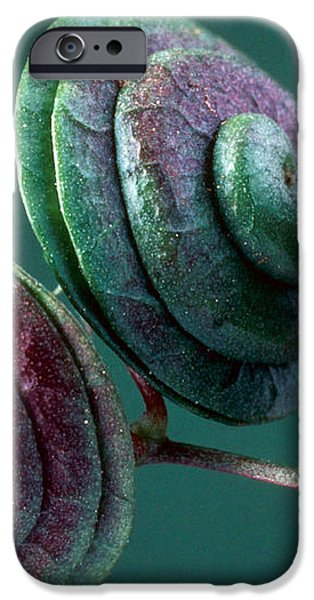 Fruits of Wild Lucerne iPhone Case by Nuridsany et Perennou and Photo Researchers