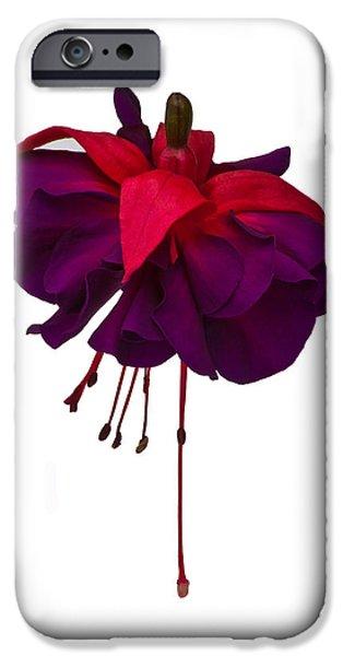 Fushia iPhone Cases - Fuchsia on White iPhone Case by Dawn OConnor