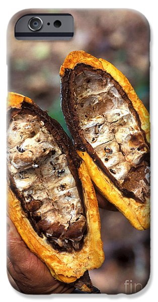 Fungal Infection Of Cacao iPhone Case by Science Source
