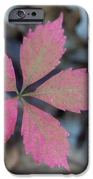 Fushia Leaf 2 iPhone Case by Douglas Barnett