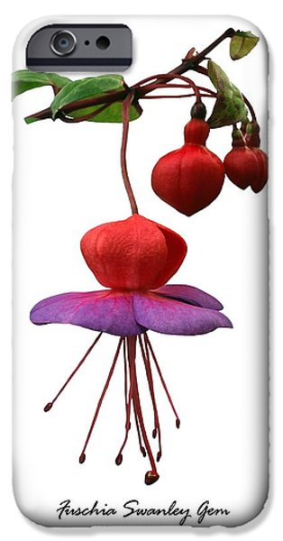 Fushia 'swanley Gem' iPhone Case by Archie Young