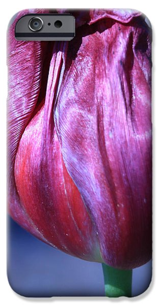 Fushia Tulip iPhone Case by Donna Corless