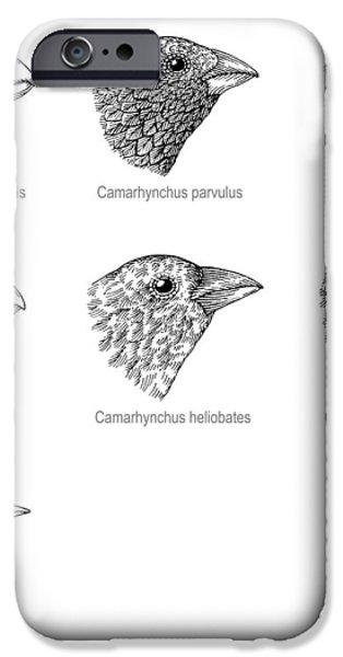 Galapagos Finches, Artwork iPhone Case by Gary Hincks
