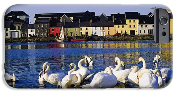 Swans... iPhone Cases - Galway City, County Galway, Ireland iPhone Case by The Irish Image Collection