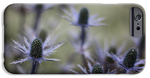 Thistle iPhone Cases - Garden Facets iPhone Case by Mike Reid